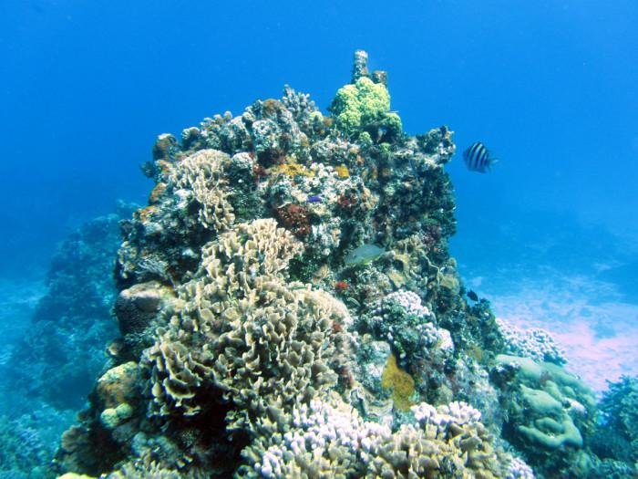 Combined snorkel