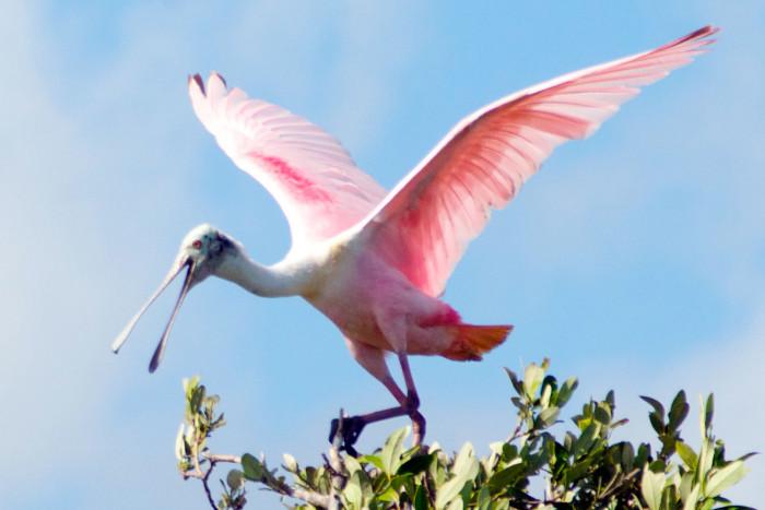 Migratory species