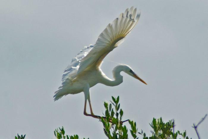 Bird-watching tour