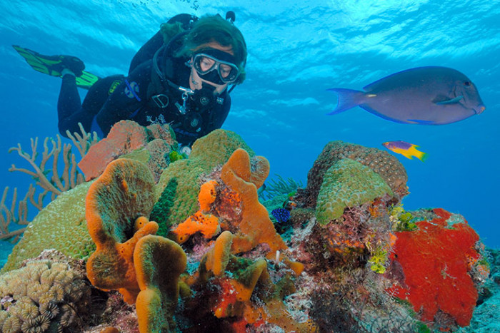 Beach dive for beginners this is cozumel - Cozumel dive packages ...