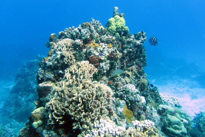 Southern reefs