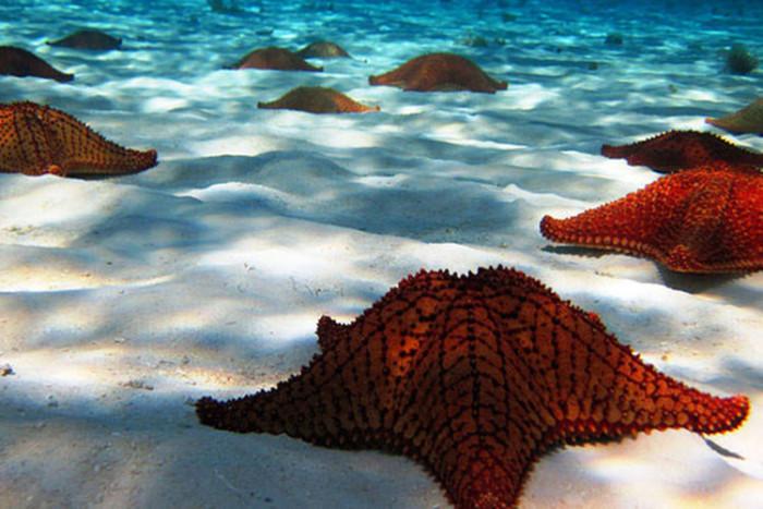 El Cielo starfish